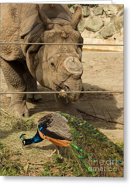 Rhinoceros Greeting Cards - Lunch Date Greeting Card by Suzanne Luft