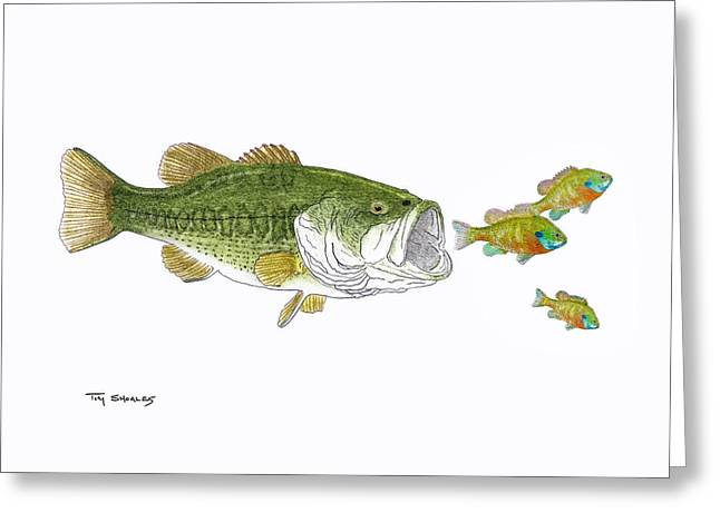 Bass Pastels Greeting Cards - Lunch for One Greeting Card by Tim Shoales