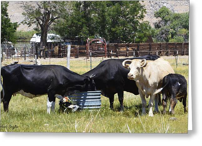 Going To Market Greeting Cards - Lunch Time In The Pasture 2 Greeting Card by Barbara Snyder
