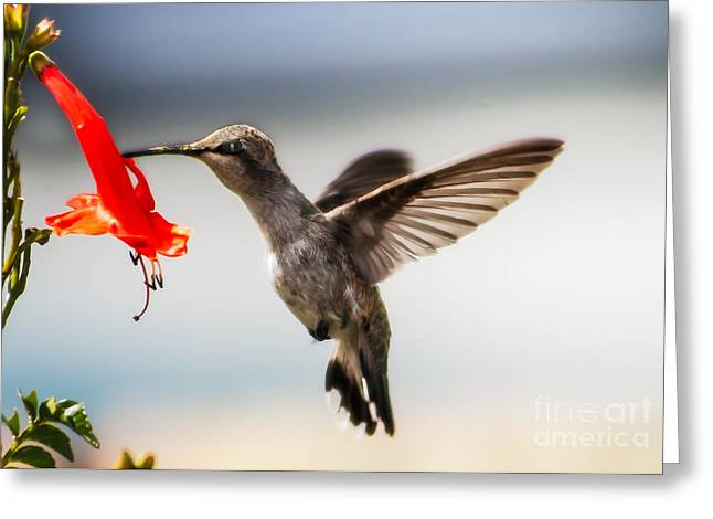 Suckle Greeting Cards - Lunch Time Greeting Card by Robert Bales