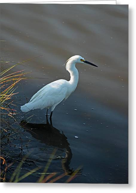 Marsh Scene Greeting Cards - Lunchtime is Serious Business Greeting Card by Suzanne Gaff