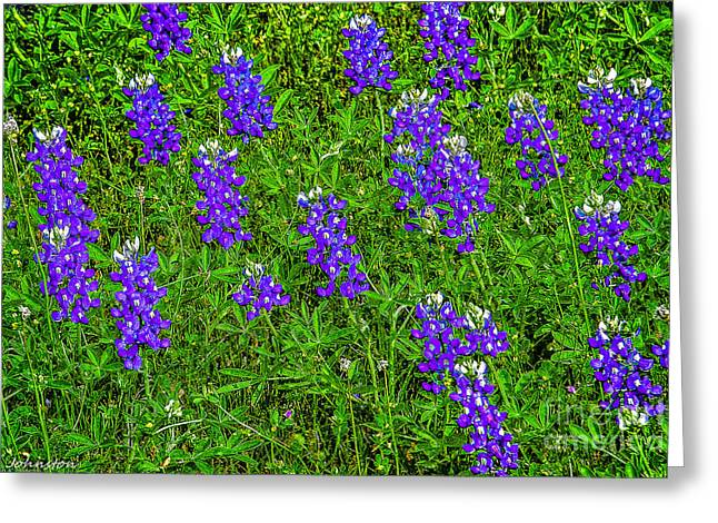 Fed Mixed Media Greeting Cards - Lupine at Lake Whitney Texas Greeting Card by  Bob and Nadine Johnston