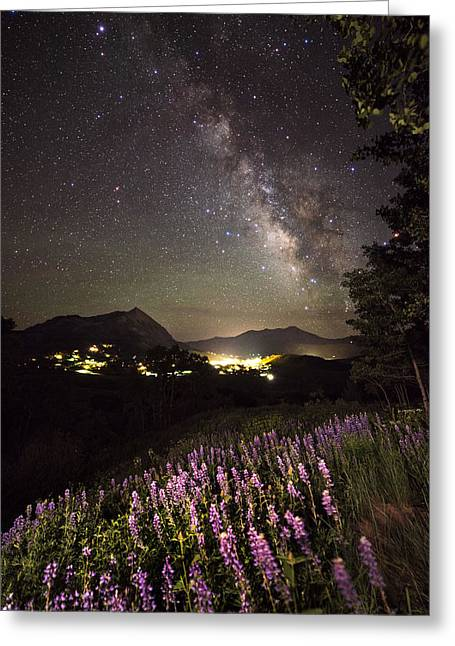 Colorado Captures Greeting Cards - Lupine Blanket Under The Stars Greeting Card by Mike Berenson