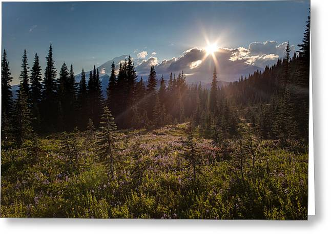 Lupine Field Sunstar Greeting Card by Mike Reid