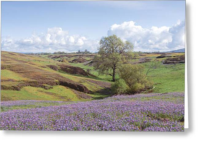 Foothill Greeting Cards - Lupine Field With Mountain Greeting Card by Panoramic Images