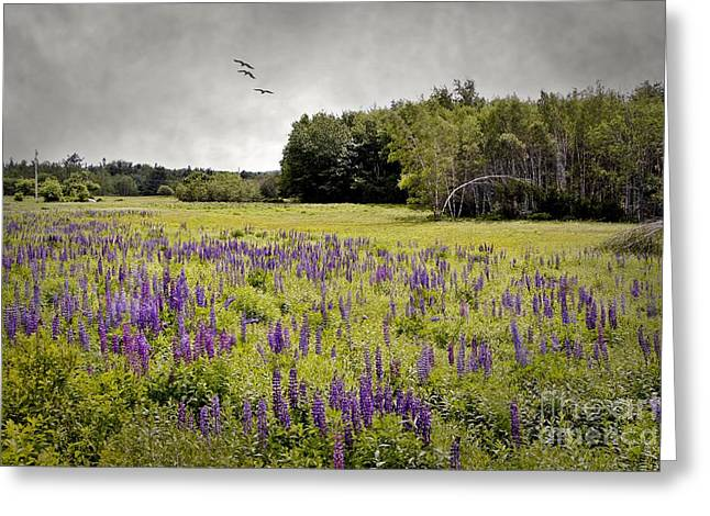 Spring In Maine Greeting Cards - Lupine Fields Greeting Card by Karin Pinkham