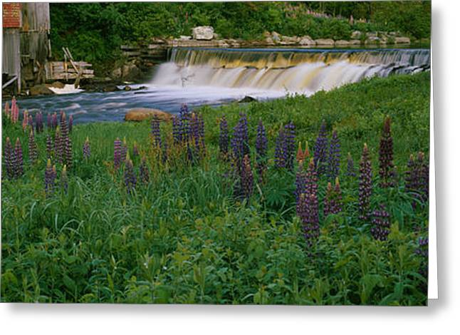 Scenic River Photography Greeting Cards - Lupine Flowers In A Field, Petite Greeting Card by Panoramic Images
