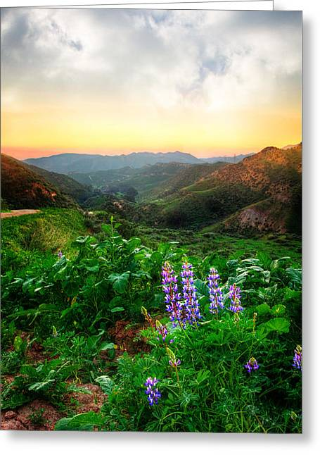 Ventura California Greeting Cards - Lupine Love Greeting Card by Lynn Bauer
