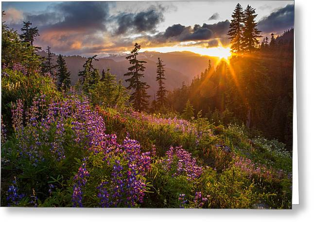 Lupine Meadows Sunstar Greeting Card by Mike Reid