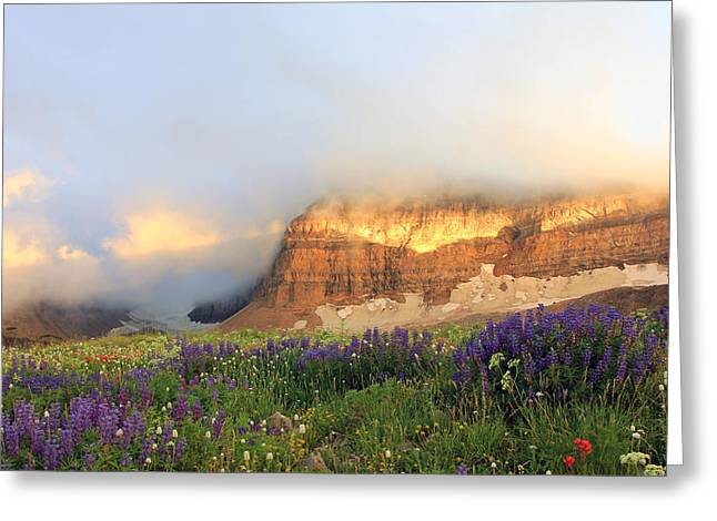 Dramatic Lighting Greeting Cards - Lupine Wildflowers on Mount Timpanogos Greeting Card by Johnny Adolphson