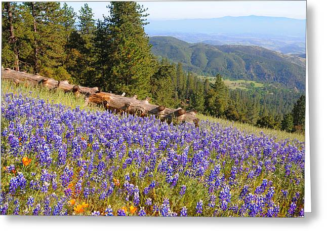 Santa Lucia Mountains Greeting Cards - Lupines on Figueroa Mountain Greeting Card by Lynn Bauer