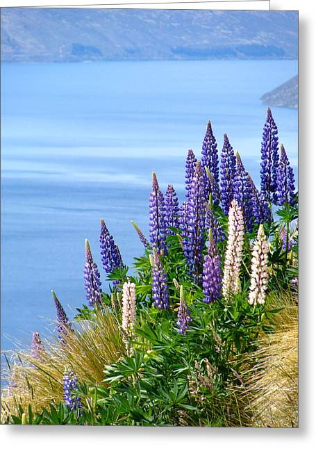 Distance Framed Prints Greeting Cards - Lupins over Queenstown Greeting Card by Antoinette  Andersen
