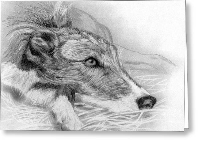 Lurcher Greeting Cards - Lurcher Dog  Greeting Card by Olde Time  Mercantile