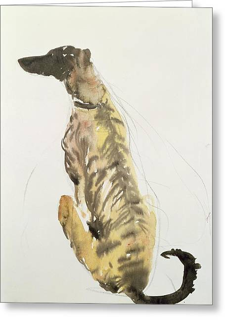 Collar Greeting Cards - Lurcher Sitting Greeting Card by Lucy Willis