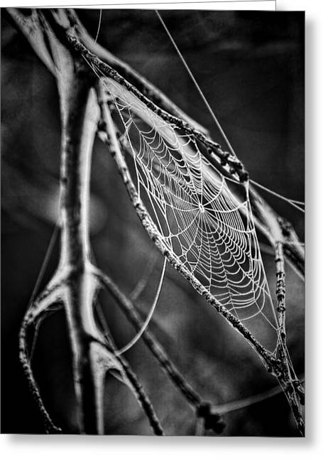 Spun Web Greeting Cards - Lure of the Web Greeting Card by Mountain Dreams