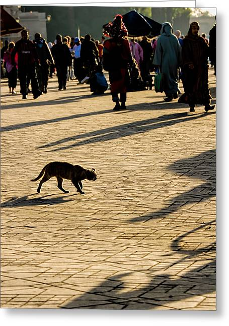 Historic Places Greeting Cards - Lurking cat in the Jemaa el Fna square Marakesh Greeting Card by David Smith