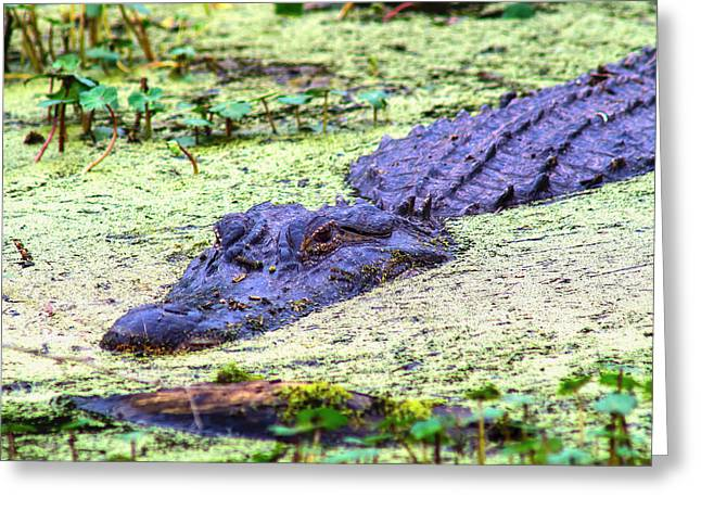 Coldblooded Greeting Cards - Lurking Greeting Card by Ronnie Cole