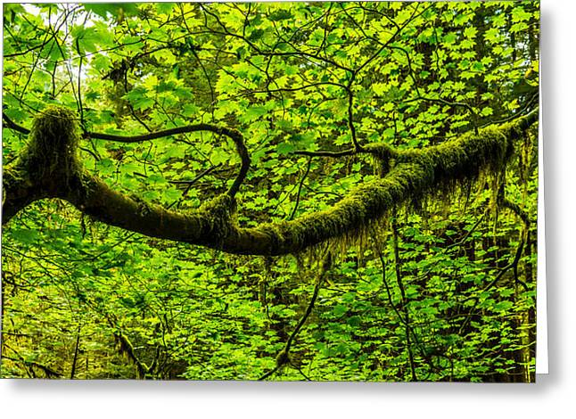Moss Greeting Cards - Lush Greeting Card by Chad Dutson