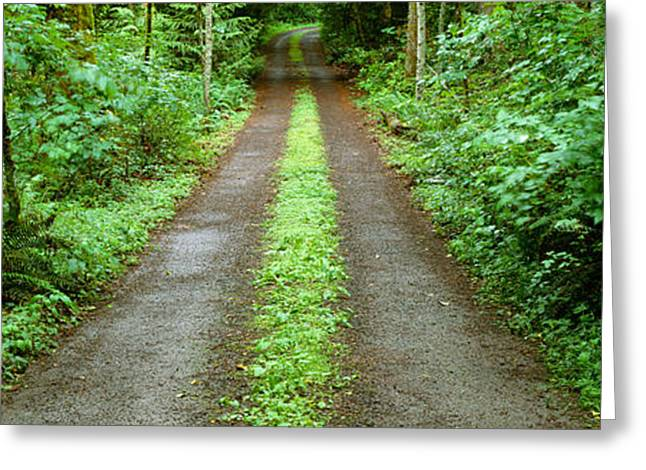 Bainbridge Island Greeting Cards - Lush Foliage Lining A Wet Driveway Greeting Card by Panoramic Images