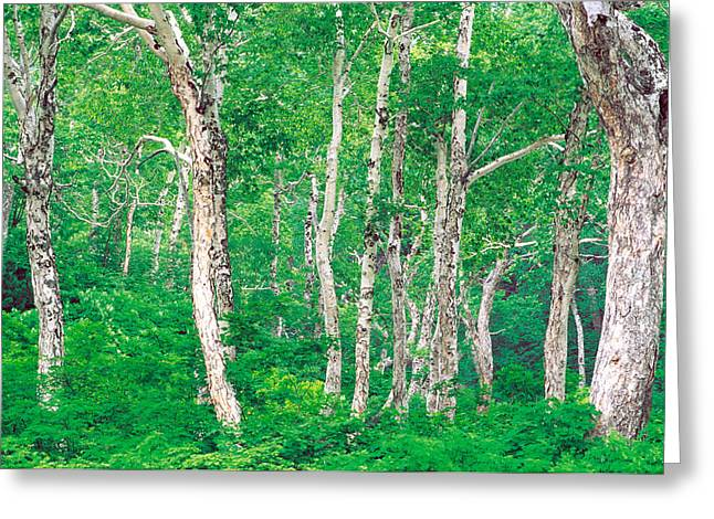 Woodland Scenes Greeting Cards - Lush Forest Greeting Card by Panoramic Images