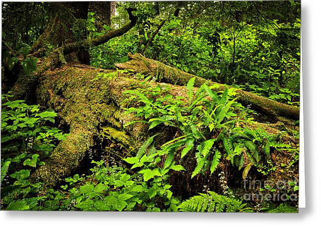 Conifer Tree Greeting Cards - Lush temperate rainforest Greeting Card by Elena Elisseeva
