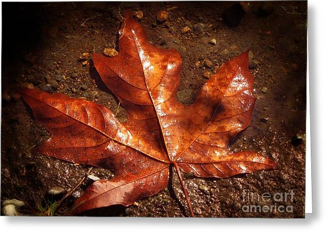 Mud Season Greeting Cards - Lustrous Maple Greeting Card by Roger Reeves  and Terrie Heslop