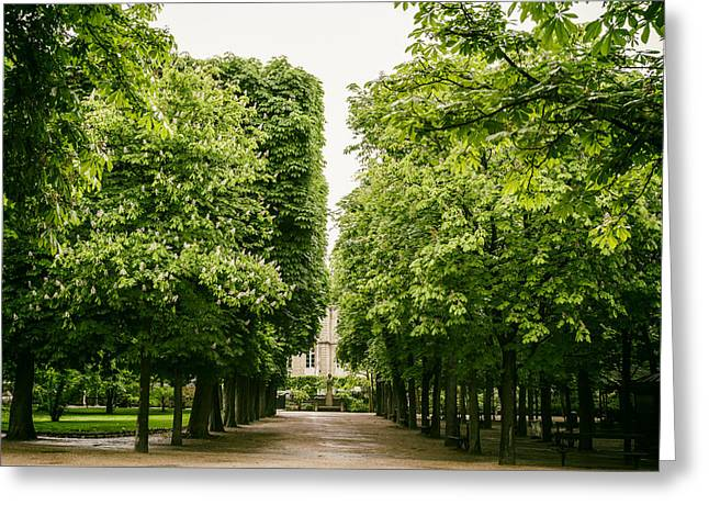 Paris Trees Nature Scenes Greeting Cards - Luxembourg Park Trees Greeting Card by Nomad Art And  Design