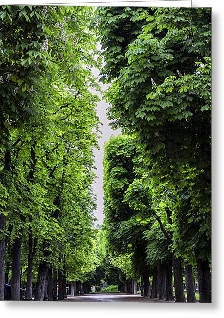 Paris Trees Nature Scenes Greeting Cards - Luxembourg Tree Avenue in Paris Greeting Card by Nomad Art And  Design