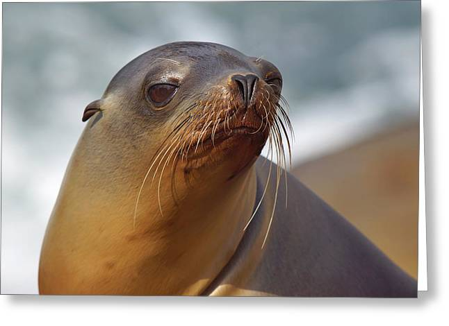 California Sea Lions Greeting Cards - Lyin at the Sea Greeting Card by Leda Robertson