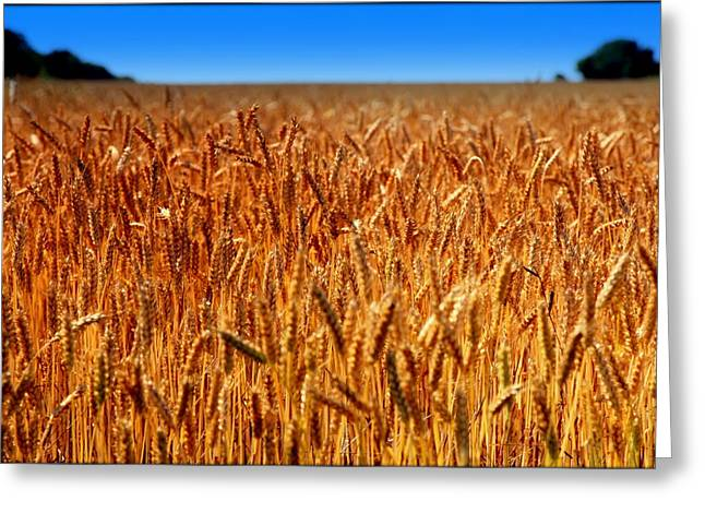 Grocery Store Greeting Cards - LYING in the RYE Greeting Card by Karen Wiles