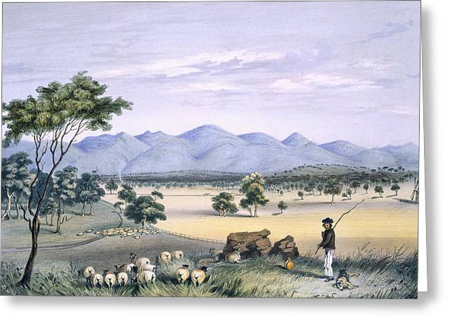 Shepherds Greeting Cards - Lynedoch Valley Looking Towards Greeting Card by George French Angas