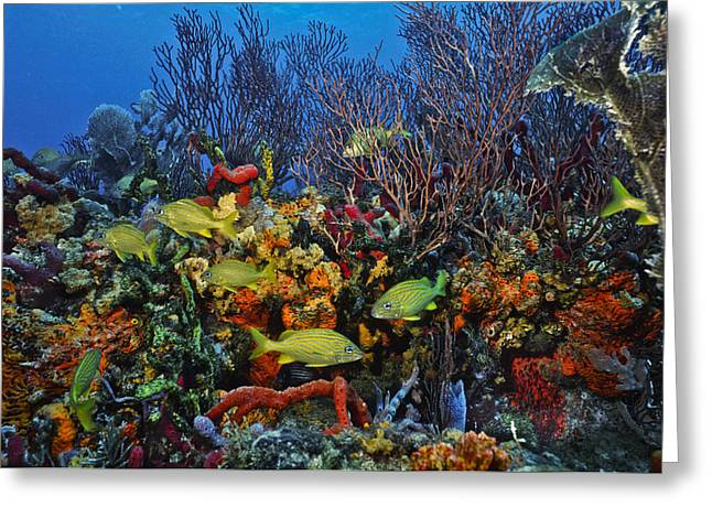 Grunts Greeting Cards - Lynns Reef on a perfect day Greeting Card by Sandra Edwards