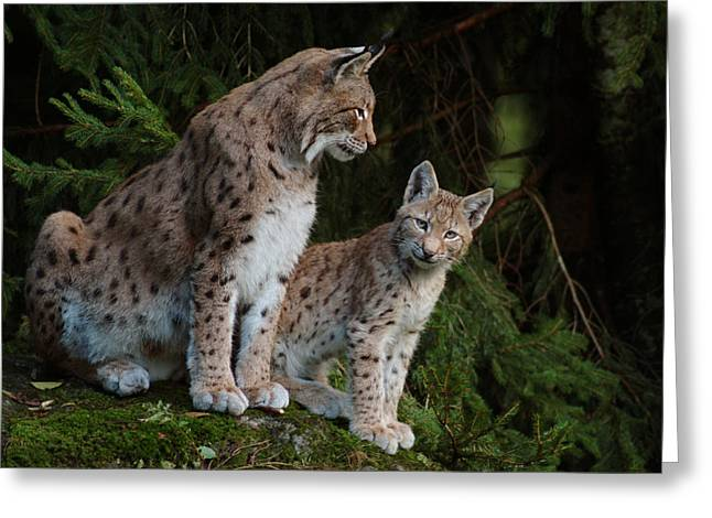Pairs Greeting Cards - Lynx mother with her cub Greeting Card by Intensivelight