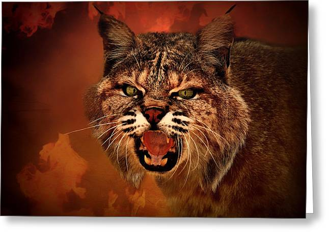 Growling Photographs Greeting Cards - Lynx - Up Close and Personal Greeting Card by Mountain Dreams