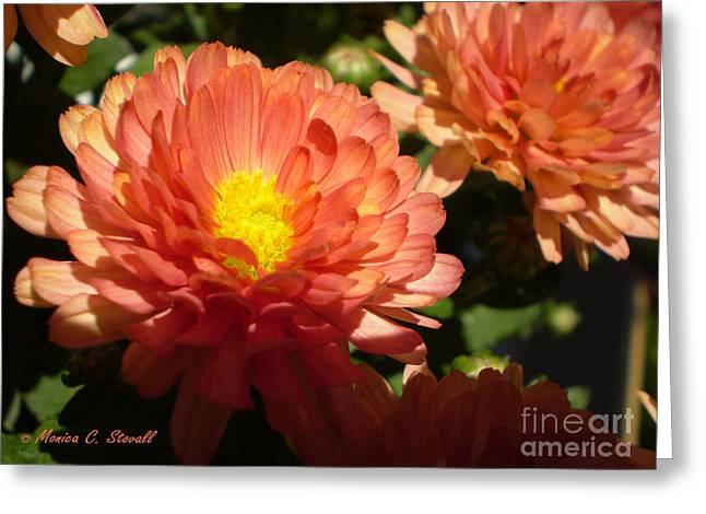 Distance Framed Prints Greeting Cards - M Bright Orange Flowers Collection No. BOF1 Greeting Card by Monica C Stovall