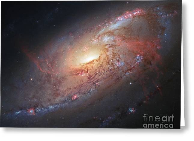 M106 Greeting Cards - M106-Spiral Galaxy Greeting Card by Science Source