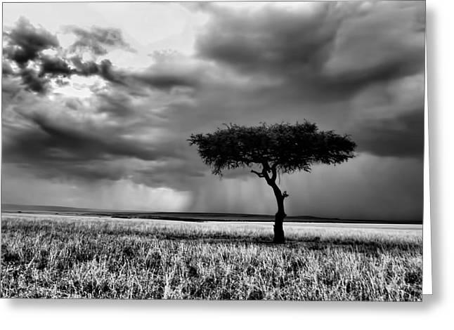 Maasai Mara In Black And White Greeting Card by Amanda Stadther