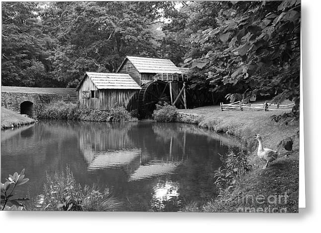 Wild Geese Greeting Cards - Mabry Mill Greeting Card by Mel Steinhauer