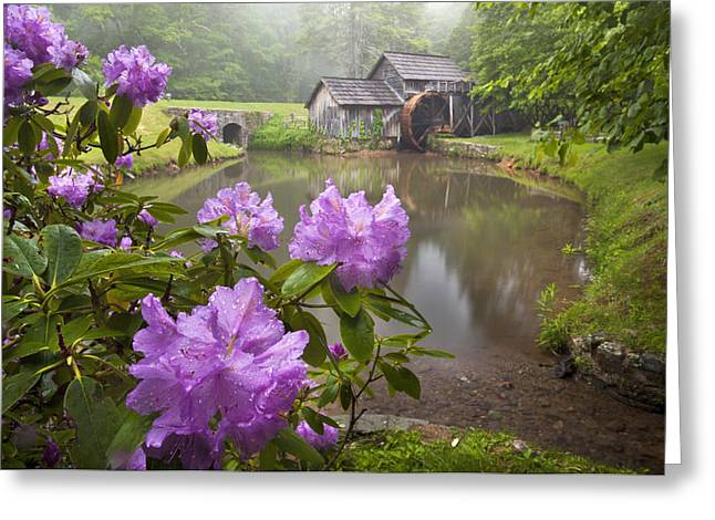 Mabry Rhododendron Greeting Card by Brent McGuirt