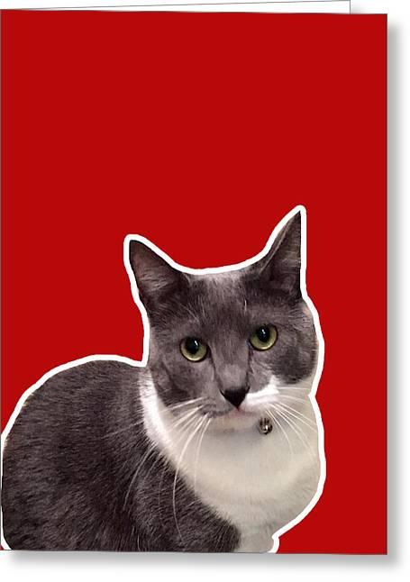 Cats Mixed Media Greeting Cards - Mac Attack-Custom Order Greeting Card by Linda Woods
