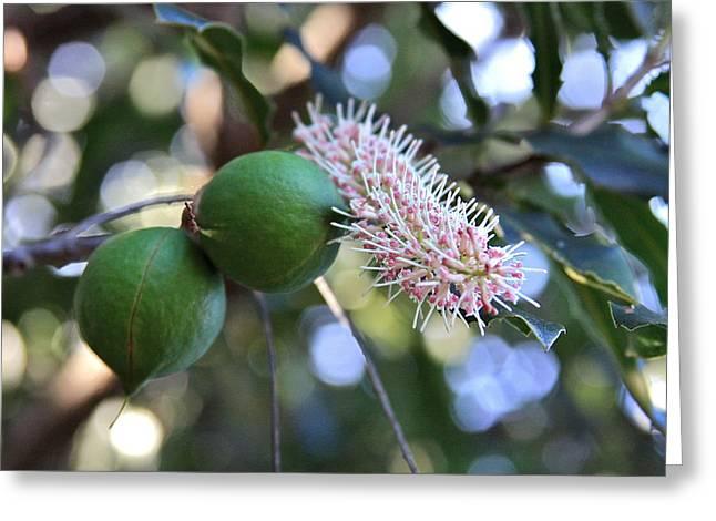 Macadamia Nuts And Flower Greeting Card by Karon Melillo DeVega