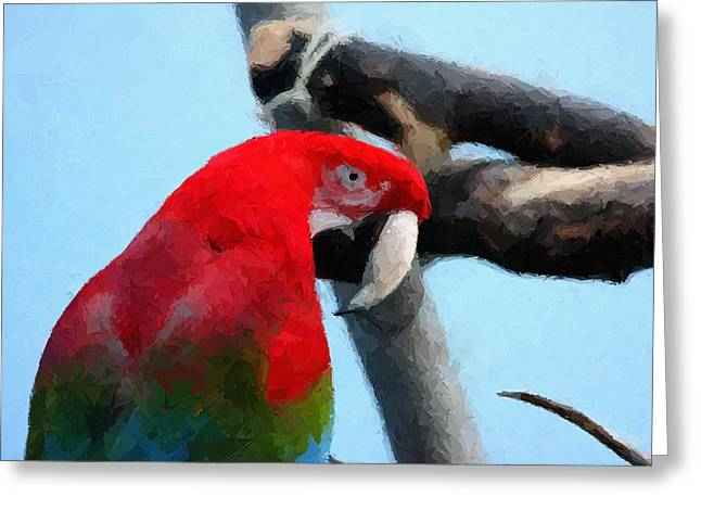 Macaw Art Print Greeting Cards - Macaw Greeting Card by Mattucci Photography