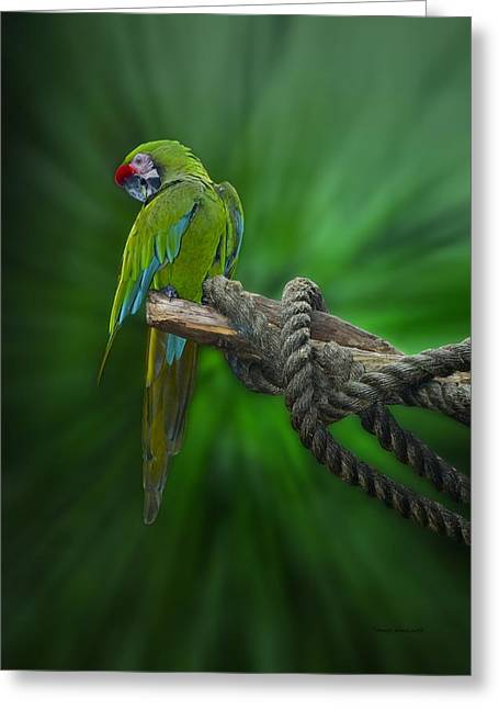 Photography By Tom Woolworth Greeting Cards - Macaw Parrot Preening Greeting Card by Thomas Woolworth