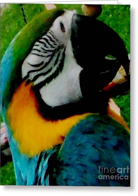 Gold Buyer Greeting Cards - Macaw Parrot taking a Nap Greeting Card by Gail Matthews