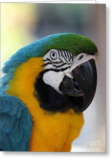 Flying Animal Greeting Cards - Macaw Portrait Greeting Card by Christiane Schulze Art And Photography