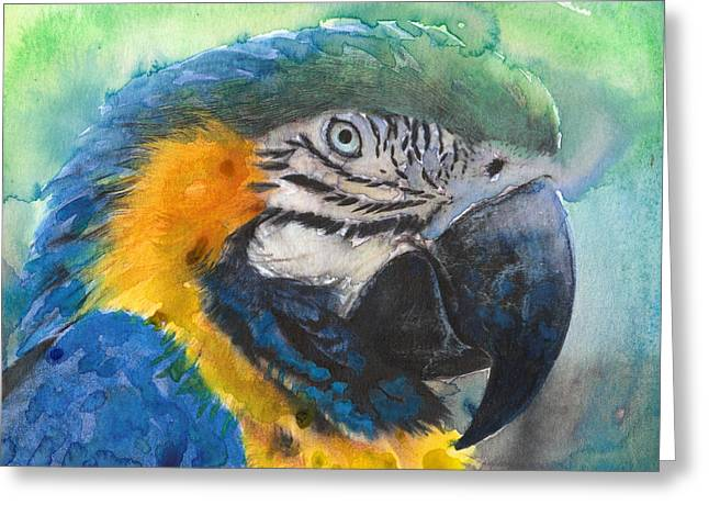 Macaw Art Print Greeting Cards - Macaw Up Close Greeting Card by Susan Powell