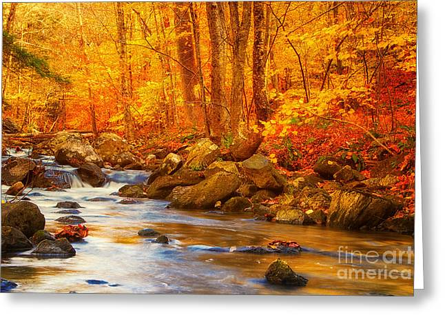 Busybee Greeting Cards - Macedonia Brook State Park Autumn Colors Greeting Card by Sabine Jacobs
