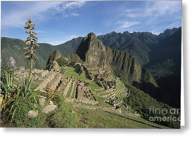 Machu Picchu and bromeliad Greeting Card by James Brunker