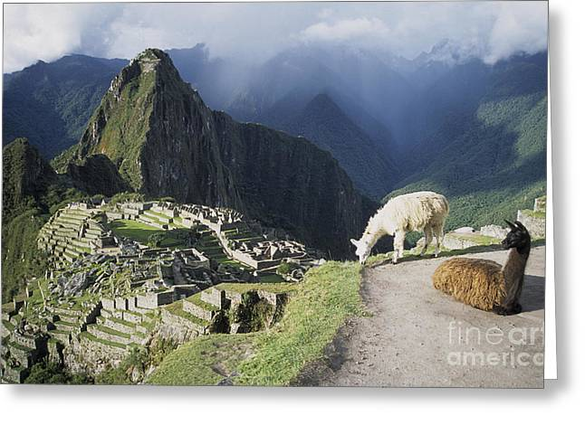 James Brunker Greeting Cards - Machu Picchu and llamas Greeting Card by James Brunker