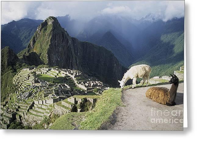 Machu Picchu And Llamas Greeting Card by James Brunker